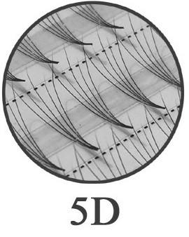 120 extensions de cils 5D - ultra léger sans nœud - diamètres 0,07 mm, 0,12 mm et 0,15 mm